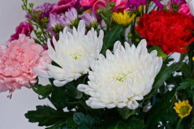 菊の花 イメージ